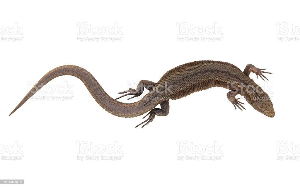 Viviparous  Common Lizard isolated on white photo libre de droits