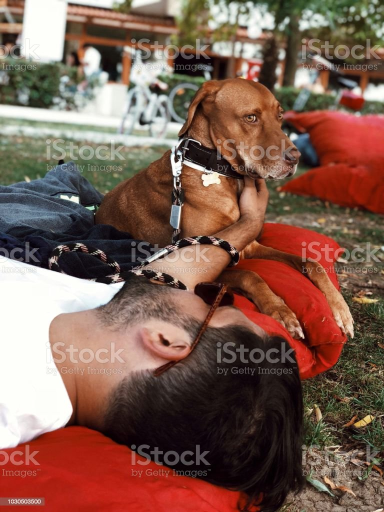 Vizsla purebred dog and his owner stock photo