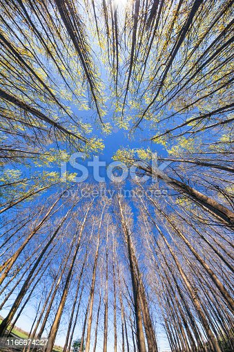 Blogging in summer, created with camera, tutorial on studying the nature in a marked forest where trees are scientifically examined and followed in their croissance by these numbers.