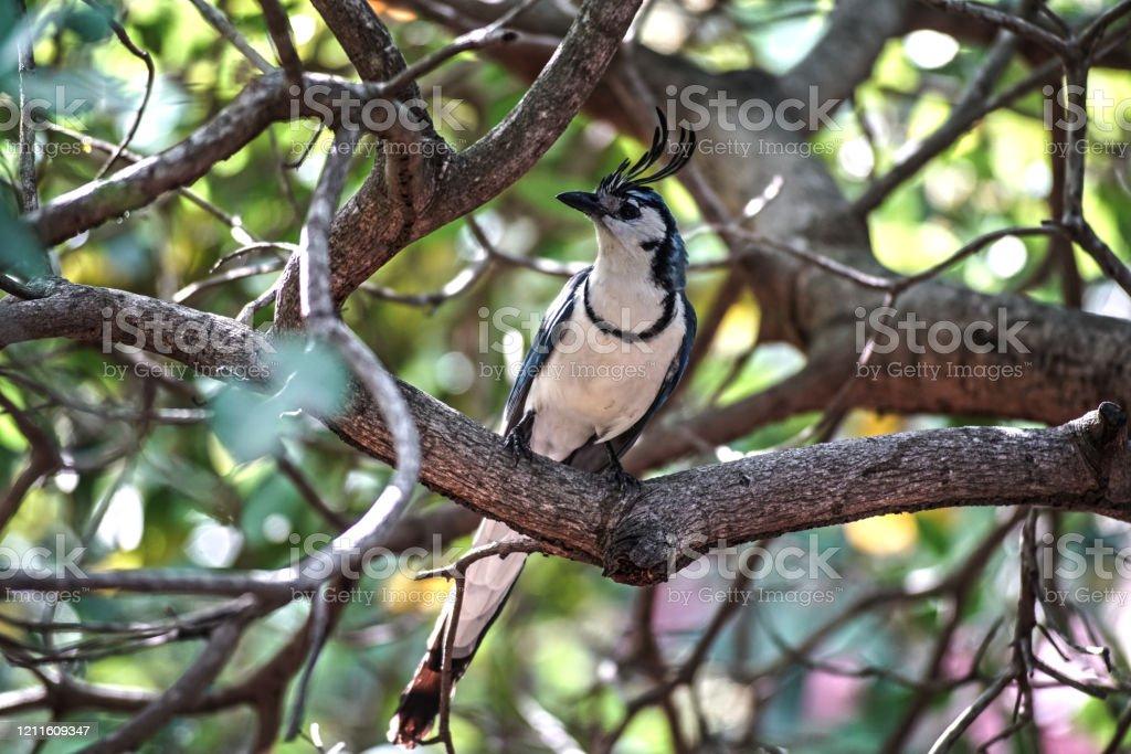 Vogel auf Ometepe - Lizenzfrei Ast - Pflanzenbestandteil Stock-Foto