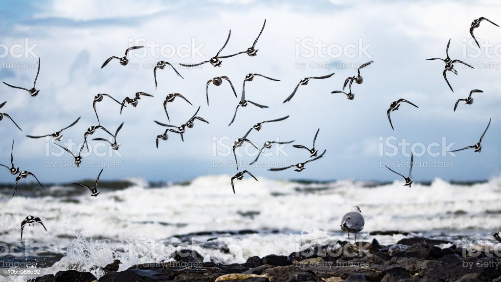 Vogelschwarm eine der Nordsee – Foto