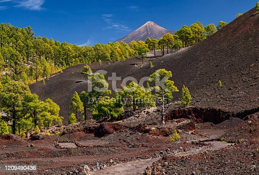 istock Volcanic landscape near Chinyero crater in Teide National Park, Tenerife, Canary islands, Spain 1209490436