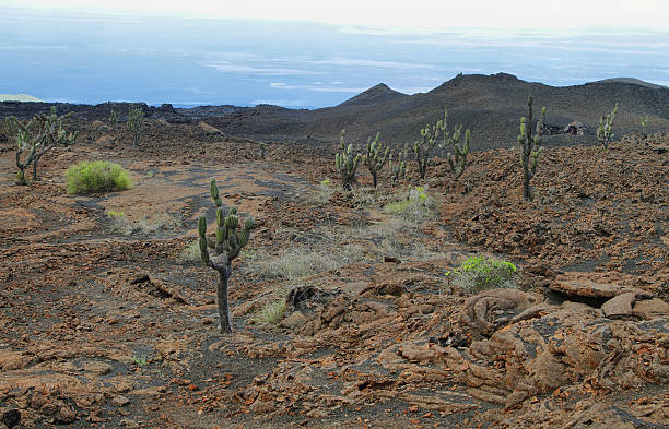 volcanic landscape, sierra negra, galapagos. - desolated stock pictures, royalty-free photos & images