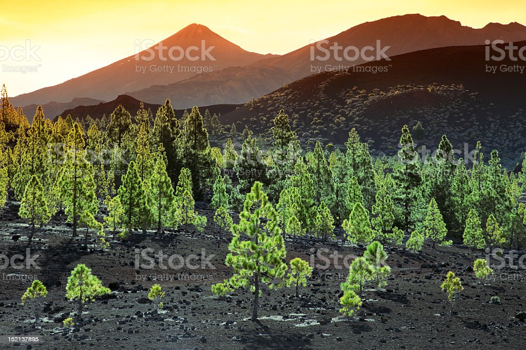 A volcanic landscape with trees in the foreground royalty-free stock photo
