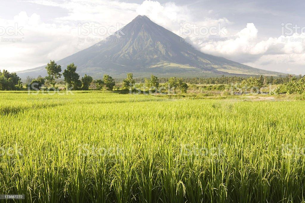 Volcano and rice field stock photo