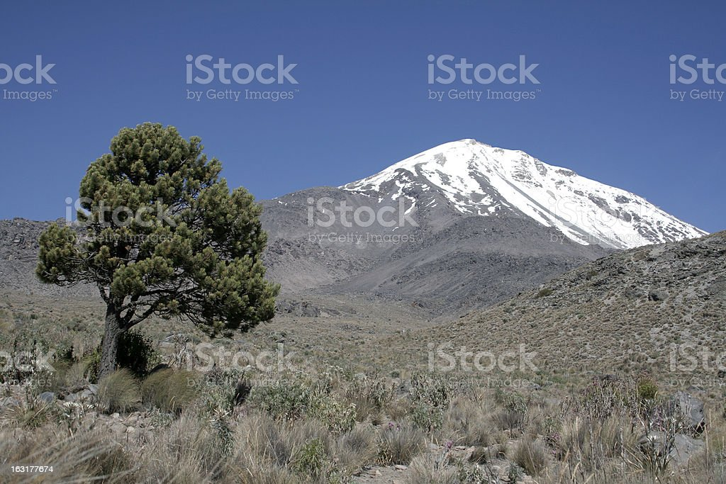 Volcano and the tree View of volcano Pico de Orizaba, highest mountain in Mexico, with pine tree in the front. Arenal Volcano Stock Photo