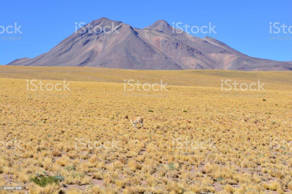 Volcano at the Atacama desert, Chile stock photo