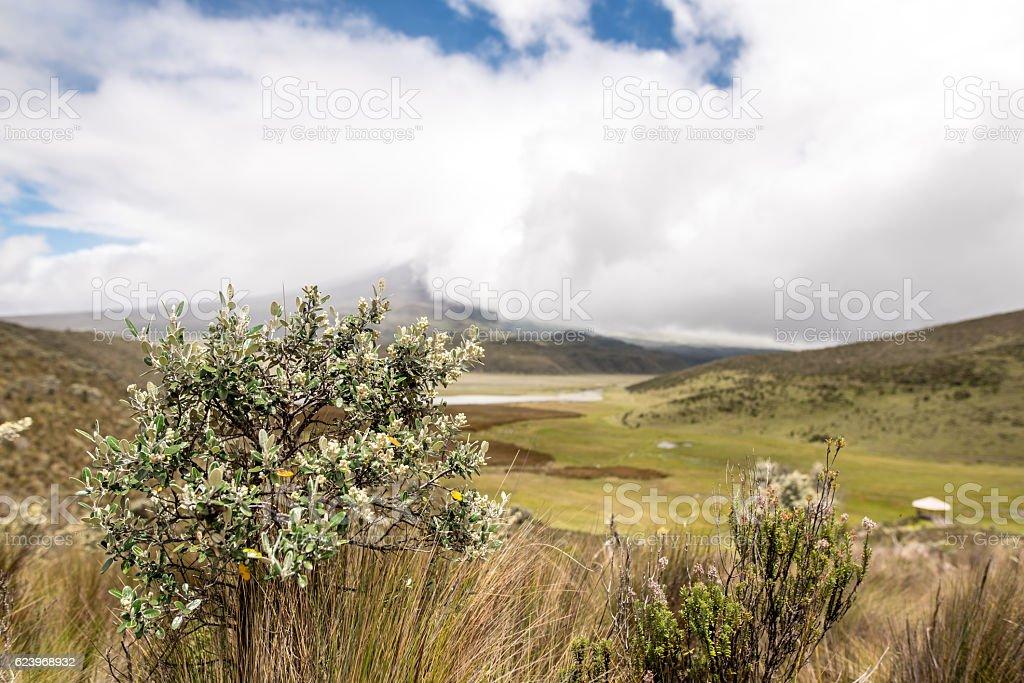 Volcano Cotopaxi National Park in Ecuador South America stock photo