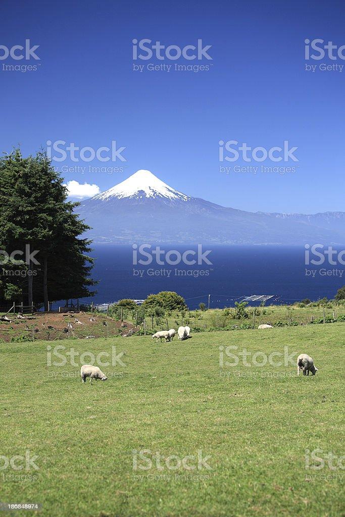 Volcano Osorno in Chile stock photo