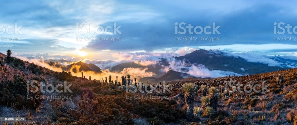 Volcano Tolima in Los Nevados National Park with beatyful vegetation frailejones (Espeletia) expedition with view from basecamp, Colombia stock photo