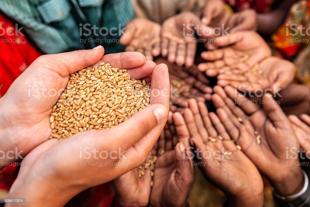 Volunteer caucasian woman giving grain to starving children stock photo