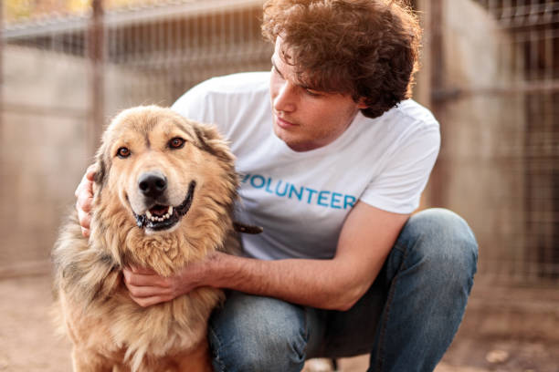 Volunteer taking care of dog in shelter stock photo