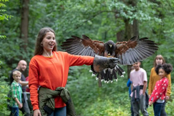 새의 먹이를 자원 봉사 - 육식조 뉴스 사진 이미지