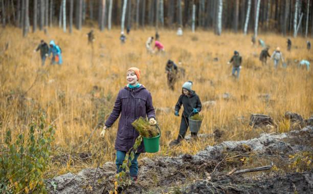 vrijwilligers zijn het planten van een jonge boompjes van een bomen in het bos - herbebossing stockfoto's en -beelden