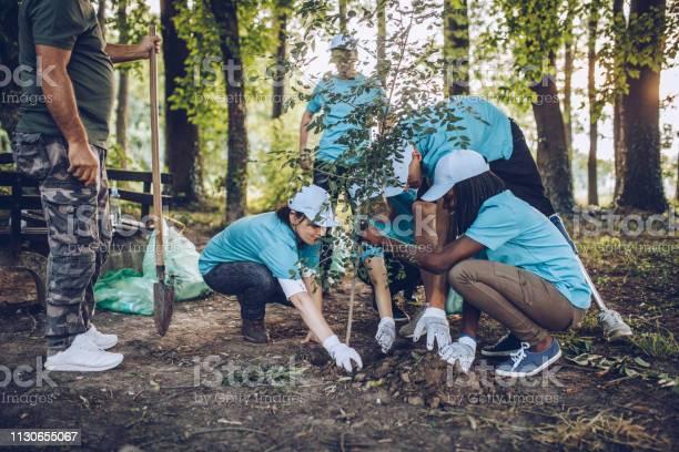 Volunteers planting a tree picture id1130655067?b=1&k=6&m=1130655067&s=612x612&h=pguto1r04t5slmmtj0klw yx75ace05veqejvwoldhs=