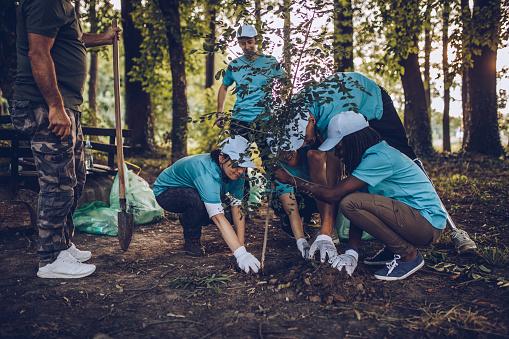 istock Volunteers Planting Tree In Park 1016706864