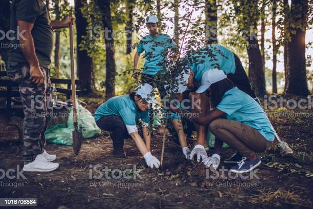 Volunteers planting tree in park picture id1016706864?b=1&k=6&m=1016706864&s=612x612&h=eseacbkls di 1hmk87 xe5a2p7loomie4jtxthjxv8=