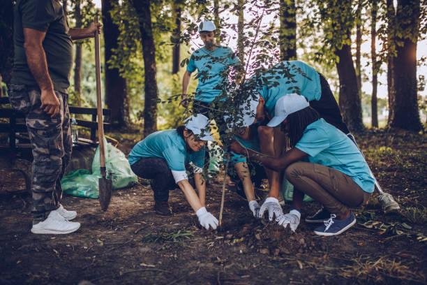 volunteers planting tree in park - alberi foto e immagini stock
