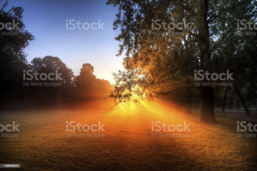 Vondelpark sunburst stock photo