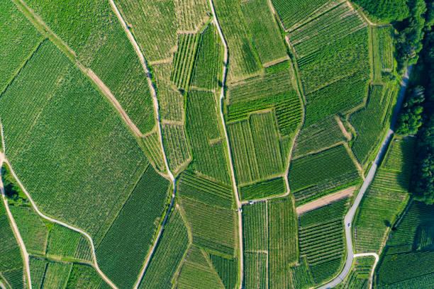 vosgische reben - aerial overview soil stock-fotos und bilder