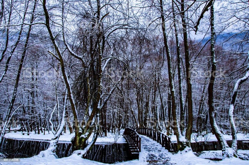Vrelo Bosne kışın - Royalty-free Ara yol Stok görsel