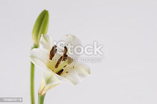 Istock Fleur Blanche Sur Fonds Blanc De Profil En Studio Et Lumiere