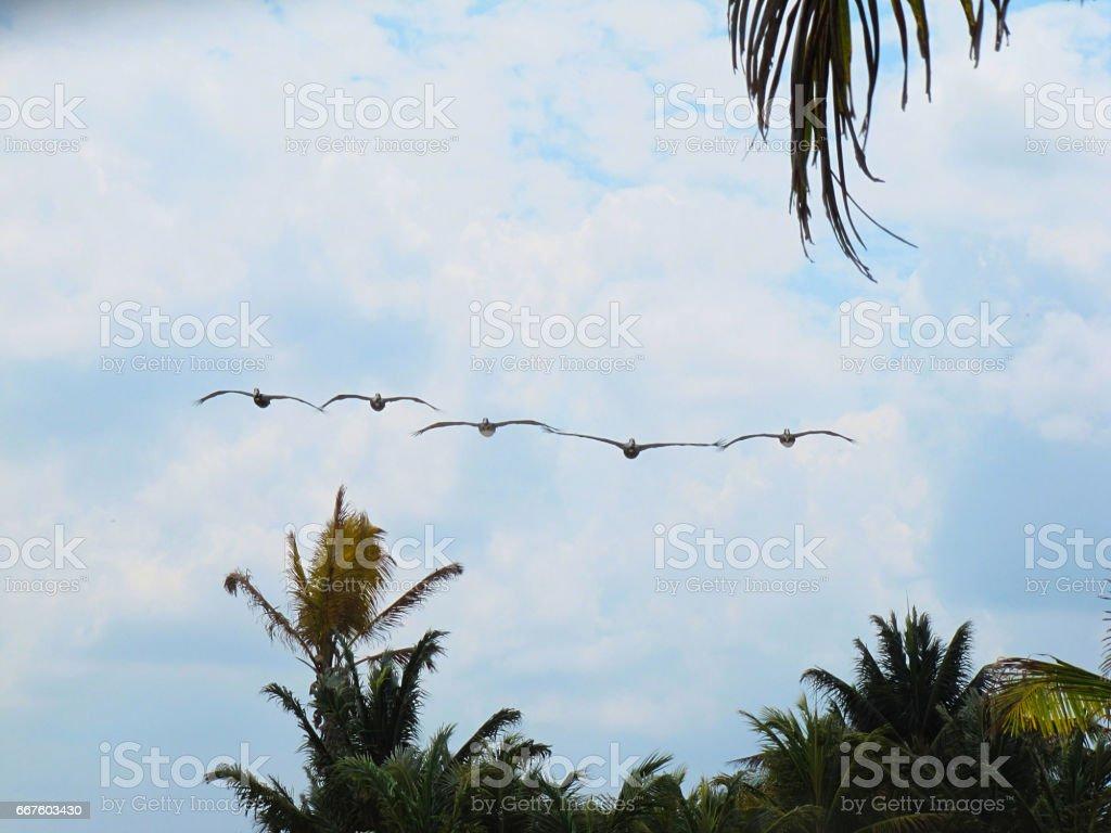 Vuelo de albatros stock photo