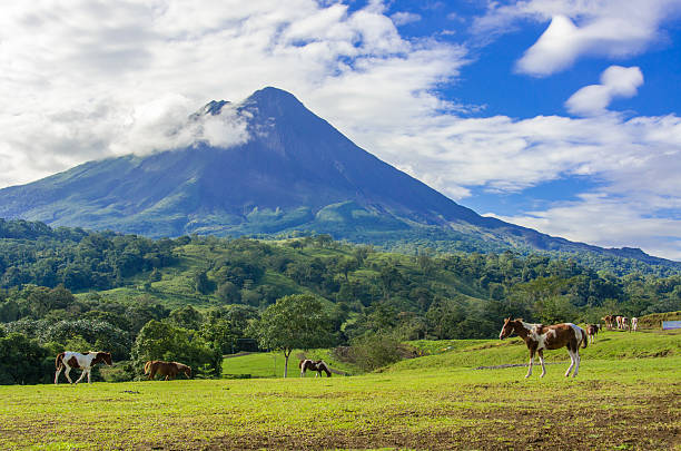 Vulcano Arenal - Horses on pasture stock photo