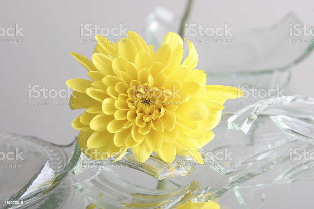 vulnerable, broken glass with flower royalty-free stock photo