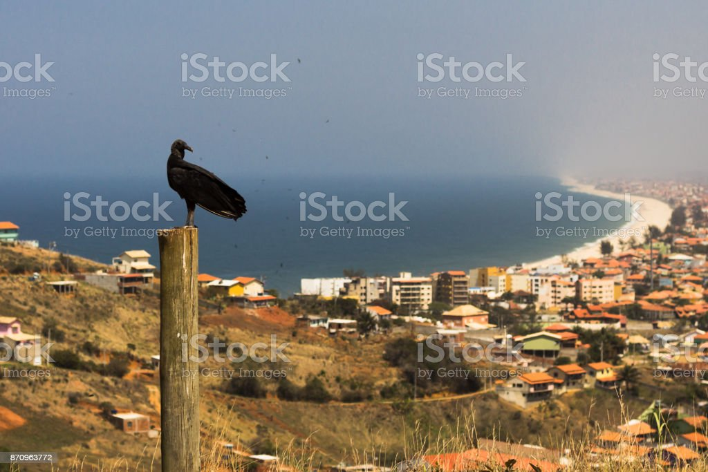 Vulture looking at the coast city stock photo