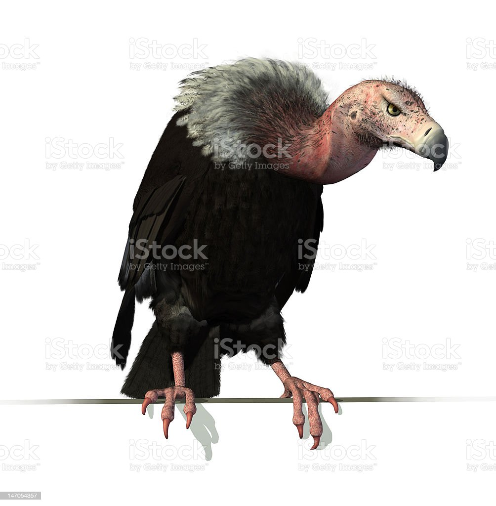 Vulture Perched on an Edge royalty-free stock photo