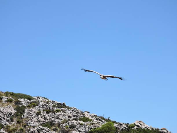 Vulture – Foto
