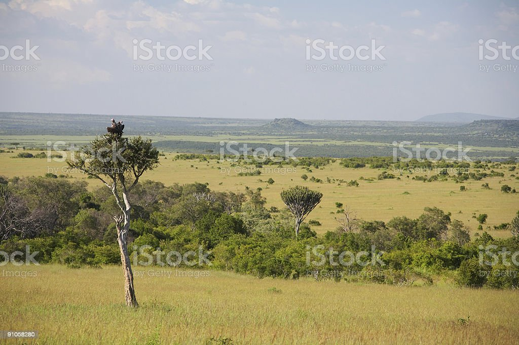 Vulture's nest royalty-free stock photo