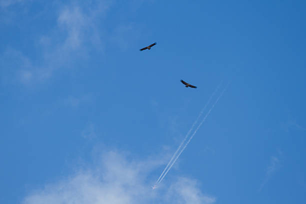 Vultures with Plane - Buitres con Avion stock photo