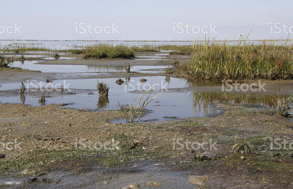 Wadden sea marsh royalty-free stock photo