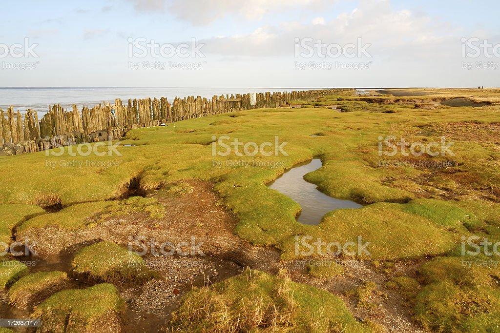 Wadden Sea National Park stock photo