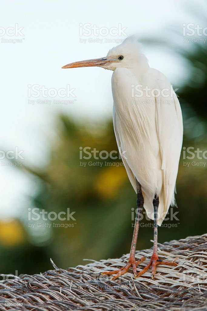 Wader Stands stock photo