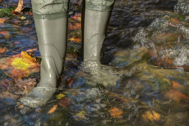 Waders in the brook. stock photo