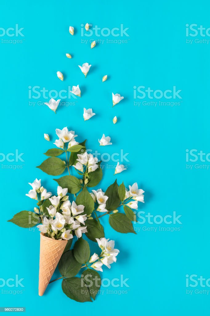 Waffle cone with jasmine flower bouquet on blue background stock photo
