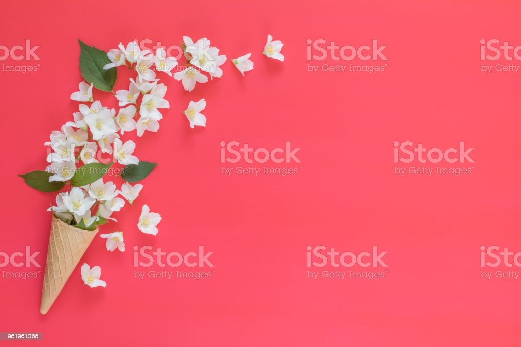 Waffle cone with jasmine flower bouquet on pink background royalty-free stock photo