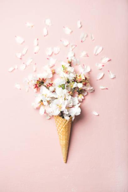 Cone de waffle com flores brancas Amendoeira em flor - foto de acervo