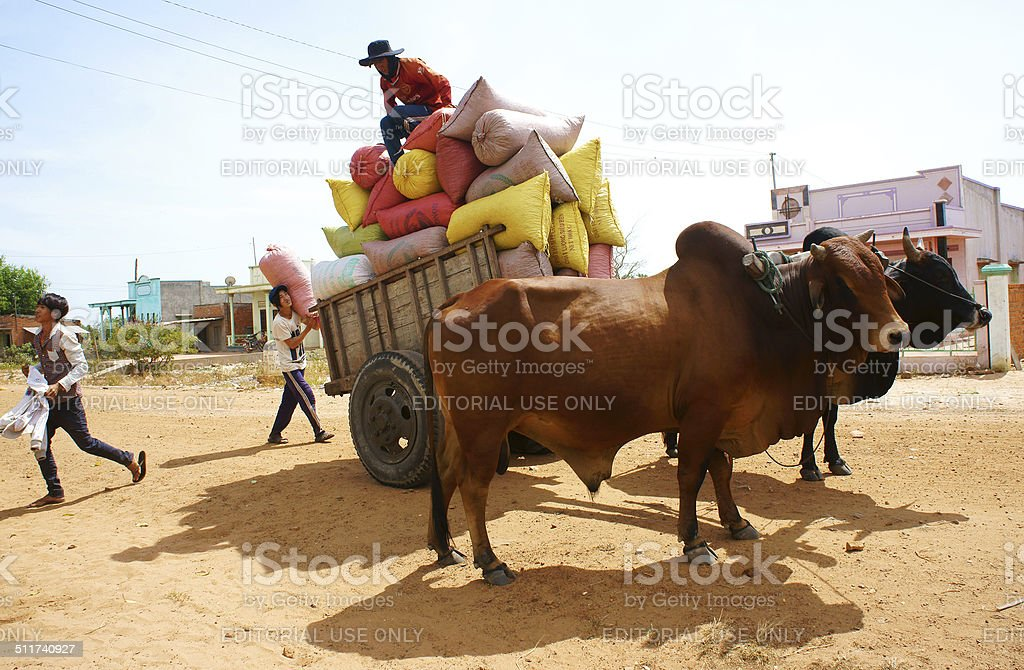 wagon, transport at Vietnam countryside stock photo