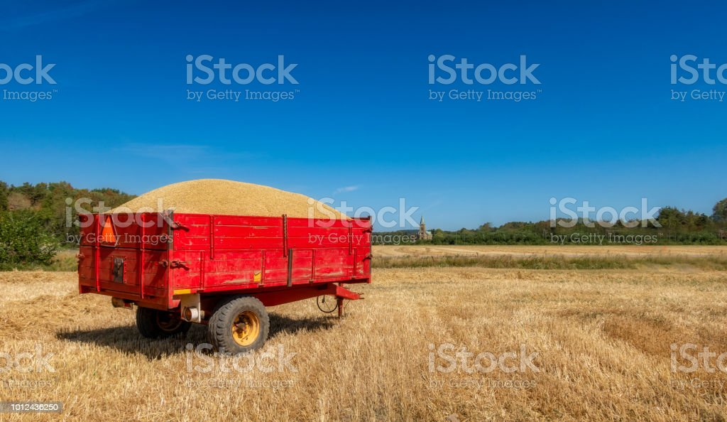 Wagon with crops stock photo
