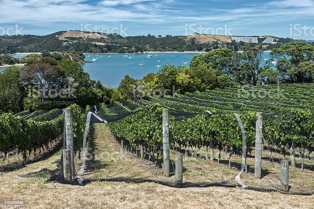Waiheke Island Winery stock photo