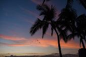 Waikiki Beach Palm Tree Sunset.