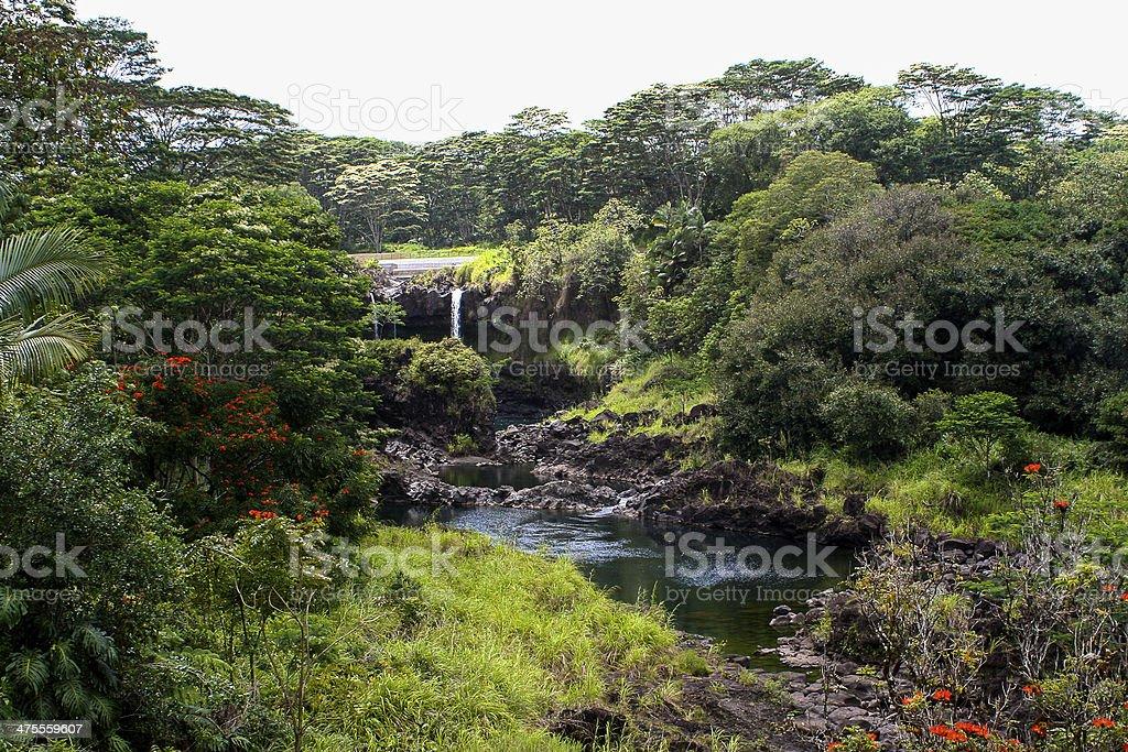 ワイルク川州立公園ハワイ - ハ...