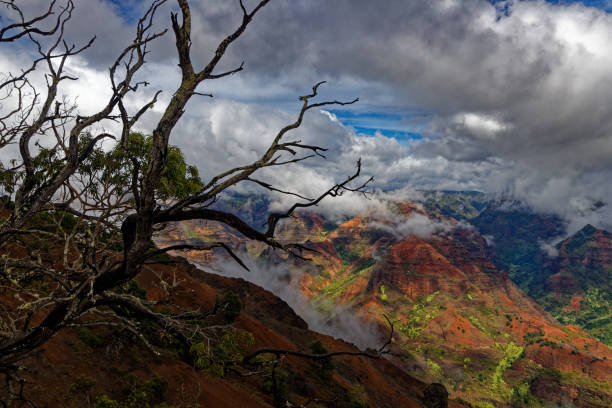 Waimea Canyon entrance Kauai, Hawaii