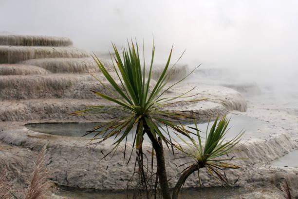 Wairakei Terrassen - Neuseeland – Foto