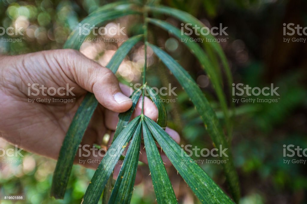 Wait A While Branch stock photo