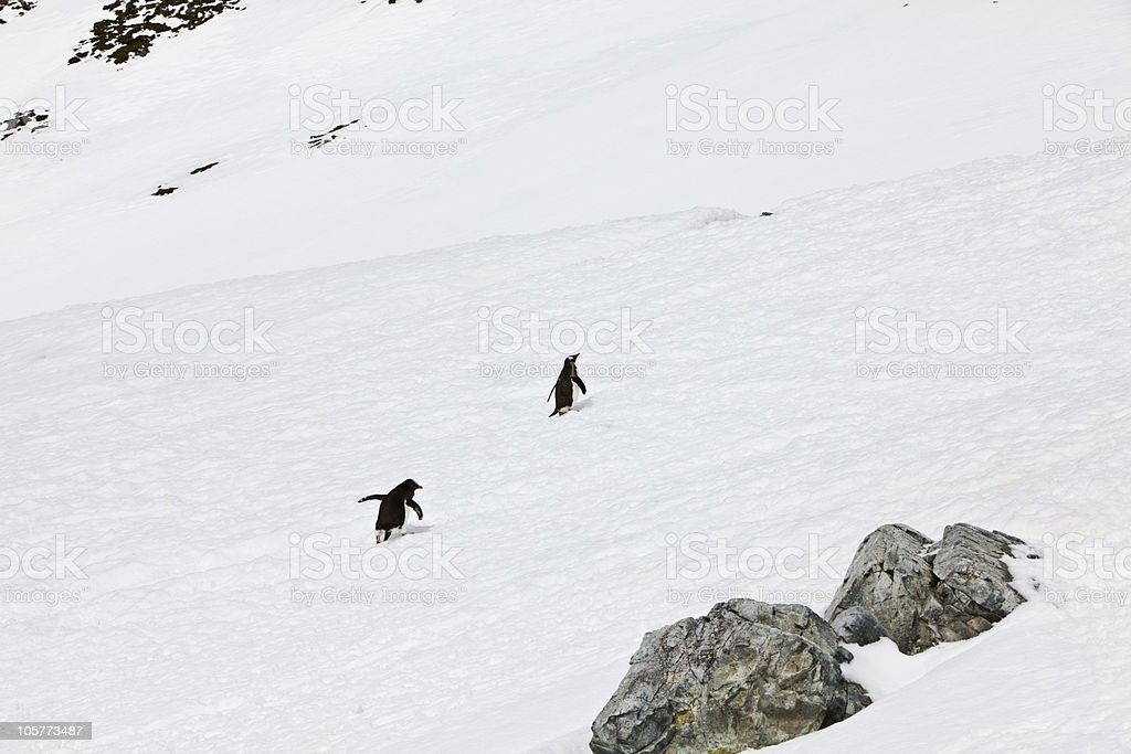 Wait for me royalty-free stock photo